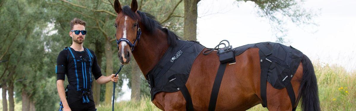 Equery spieropbouw en spierherstel voor paarden